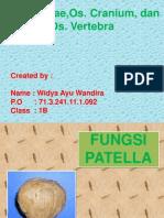 Patella, Cranium, Vertebra