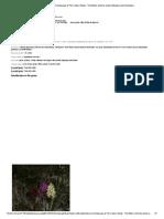 Dactylorhiza
