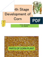 Growth Stage Development of Corn