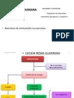 URP Metabolismo de aminoácidos bn