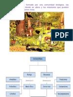1.4 Importancia de La Conservacion de Lo Ecosistemas Ciclos Biogeoqumicos