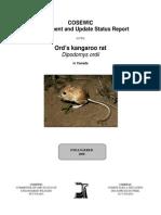 29383E-Ord's kangaroo rat
