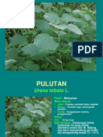 Pulu Tan