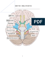 Anatomia Creierului-NERVII CRANIENI