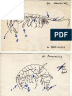 Zoology Hand Drawings 1983