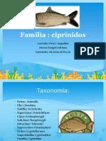 Familia Ciprinidos