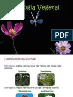 classificação das plantas e ciclos