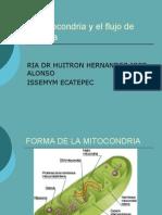 La mitocondria y el flujo de energía