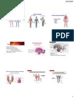 Aula Desenvolvimento Vascular