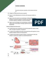 Anatomia y Fisiologia Humana