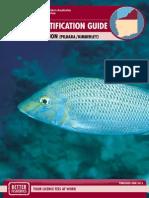 Species Identification Guide (North Coast Region)