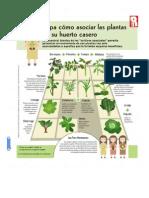 Como Asociar Las Plantas en Un Huerto Casero