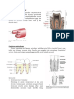 Ligamen Periodontal Edit