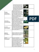 Catalog Plante