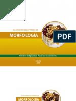 glossario ilustrado de morfologia botânica