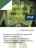 Sistem Pernapasan pada Manusia