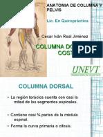 clase3-dorsalcostillas-111108184037-phpapp02