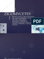 Clase Zigomycetes