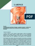 Medicina - Anatomia Laringe