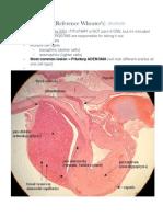 CNS Microanatomy Notes