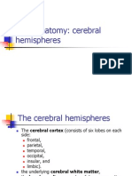 Brain Anatomy Hemispheres