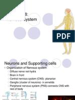 B Nervous System