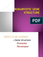 Gene Structure1