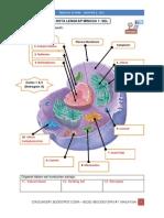 Nota Biologi SPM Pertama - Sel