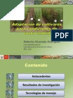 Adaptacion de Cultivares Para Condiciones de Costa Central.
