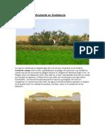 Datos sobre la Avutarda en Andalucía