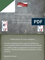 Sistema Cardiovascular Arturo Completo