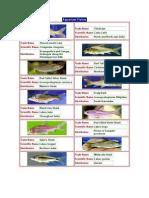 aquarium fish, santoshDocument (2)