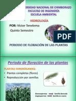 Floracion Victor