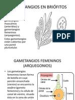 briofitos resumido