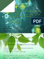 Matriz de inducción (Diana-Gaby) Ideas científicas