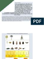 Orígen de los Coleópteros