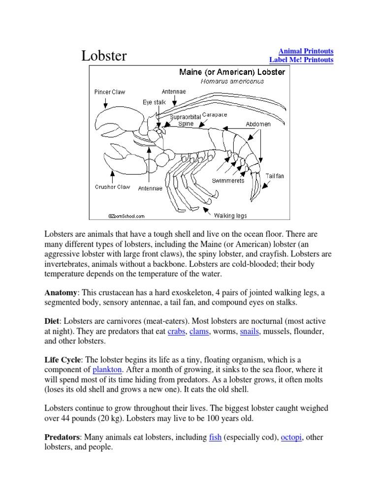 List of Animals   Octopus   Shrimp