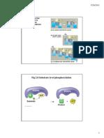 Biochemistry Lect 3 2011 Colour 2 Slides Per Page