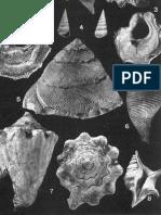 Malacofauna Dello Stratotipo Piacenziano, Pliocene di Castell'Arquato; Erminio Caprotti, 1976