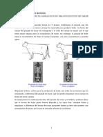 Tipos de Ganado Bovino (Leche y Carne)