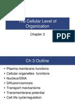 Chapter 3 Cellular Organization