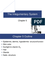 Chapter 5 Integumentary System.pdf