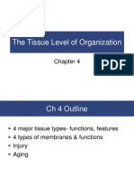 Chapter 4 Tissue Organization