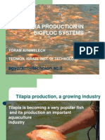 Tilapia Biofloc