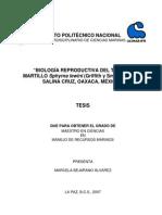 Bejarano-Álvarez,+M.+2007.+Tesis+de+Maestría.tiburones