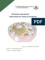 Atividade Laboratorial - Observação de Células Eucarióticas
