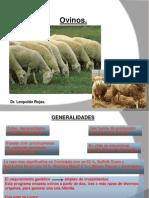 1.Presentaciòn ovinos 2012