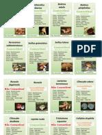 espécies_cogumelos