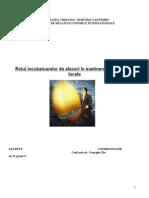 Rolul Incubatoarelor de Afaceri in Sustinerea Economiilor Locale