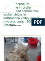 Hydro Pericardium Syndrome in Broiler Breeder and Commercial Broiler